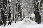 Snow covered trees at Caldicot Castle.<br /> 13.01.10<br /> ©Steve Pope<br /> Sportingwales<br /> The Manor <br /> Coldra Woods<br /> Newport<br /> South Wales<br /> NP18 1HQ<br /> 07798 830089<br /> 01633 410450<br /> steve@sportingwales.com<br /> www.fotowales.com<br /> www.sportingwales.com<br /> ©Steve Pope<br /> Sportingwales<br /> The Manor <br /> Coldra Woods<br /> Newport<br /> South Wales<br /> NP18 1HQ<br /> 07798 830089<br /> 01633 410450<br /> steve@sportingwales.com<br /> www.fotowales.com<br /> www.sportingwales.com