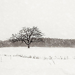 STILL WAITING FOR SPRING -- It seems that Winter will just not leave the American Midwest.  Taken near Horicon, Wisconsin, USA. #michaelknapstein #midwest #midwestmemoir #blackandwhite #B&W #monochrome #blackandwhite_perfection #motherfstop #wisconsin  #bwphotography #myfeatureshoot  #fineartphotography #americanmidwest #squaremag #lensculture #mifa #moscowfotoawards #moscowinternationalfotoawards #rps #royalphotographicsociety #CriticalMass #CriticalMassTop200 #photolucida #contemporaryphotography  #portfolioshowcase11 #thegalaawards #thepolluxawards #flakphoto #ipe160 #grainedephotographe