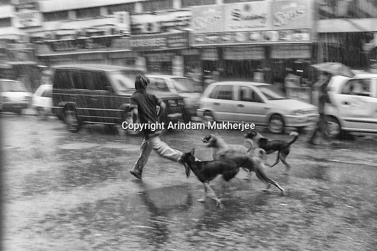 A boy plays with street dogs during a rain in Kolkata, India.
