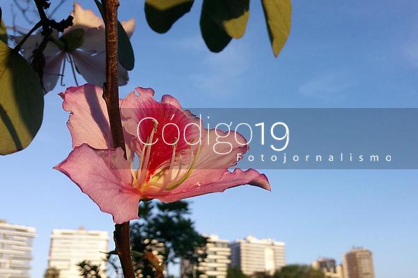 PORTO ALEGRE, RS, 22.09.2021 - ESTAÇÃO - PRIMAVERA - A estação das flores, a Primavera, inicia sua temporada 2021, com um belo dia de sol e poucas nuvens, temperaturas médias e vento fraco, em Porto Alegre, na tarde desta quarta-feira (22).