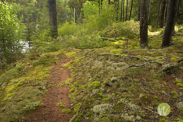 Fleck Property, Old Camp Allagash annex camp.moss and lichen