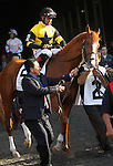 June 8, 2013. Belmont contender Freedom Child, Luis Saez up, enters the track for the post parade. Palace Malice, Mike Smith up, wins the Belmont Stakes at Belmont Park, Elmont, New York. Trainer is Todd Pletcher (Joan Fairman Kanes/Eclipse Sportswire)