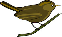 Vector illustration of a Sunbird sitting on a branch isolated on white background.<br /> <br /> This image is also available as scalable EPS and PNG format(with transparent background).