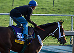 October 27, 2014:  Unbridled Forever, trained by Dallas Stewart, exercises in preparation for the Breeders' Cup Distaff at Santa Anita Race Course in Arcadia, California on October 27, 2014. Scott Serio/ESW/CSM
