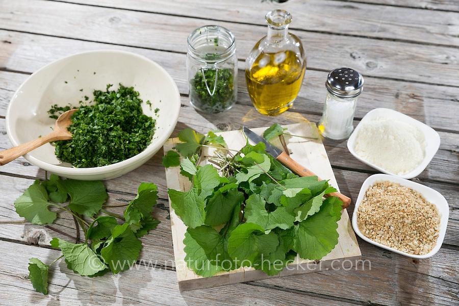 Knoblauchsrauken-Pesto, Frühlings-Pesto, Wildkräuter-Pest, Pesto aus Knoblauchsrauke, Olivenöl, gerösteten Sonnenblumenkernen, geriebenen Parmesankäse, Salz, Knoblauchsraukenpesto, Frühlingspesto, Wildkräuterpesto. Gewöhnliche Knoblauchsrauke, Knoblauchrauke, Knoblauch-Rauke, Knoblauchs-Rauke, Lauchkraut, Alliaria petiolata, Hedge Garlic, Jack-by-the-Hedge, Alliaire