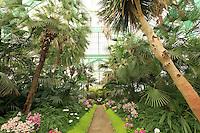 Belgique, Bruxelles, Laeken, le domaine royale du château de Laeken, les serres de Laeken durant la période d'ouverture au public au printemps // Belgique, Bruxelles, Laeken, the royal castle domain, the greenhouses of Laeken in spring.