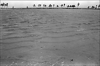 "From ""Miami in Black and White"" series<br /> Matheson Hammock Park, Miami, FL"