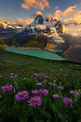 Wild asters complement this scene in the meadows of the Coast Mountains at sunset.