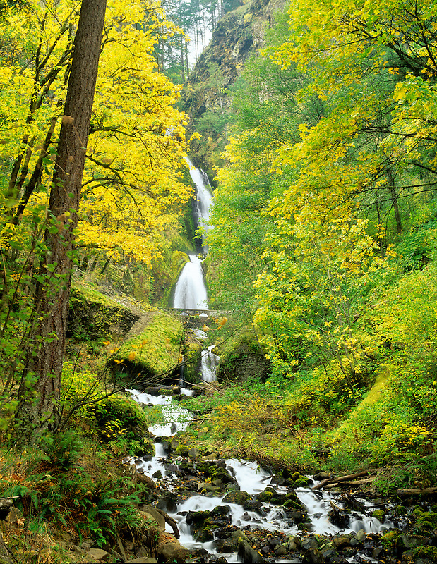 Wahkeena Falls with fall colored maples. Columbia River Gorge, Oregon.