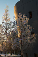 UAA's Consortium Library through frost-covered trees.
