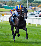 September 16, 2018 : Sioux Nation on Irish Champions Stakes Day at Currah Racecourse on September 16, 2018 in Curragh, Ireland. Scott Serio/ESW/CSM