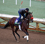 ARCADIA, CA - OCT 31: Ralis, owned by Reddam Racing, LLC and trained by Doug F. O'Neill, exercises in preparation for the Breeders' Cup Longines Turf at Santa Anita Park on October 31, 2016 in Arcadia, California. (Photo by Scott Serio/Eclipse Sportswire/Breeders Cup)