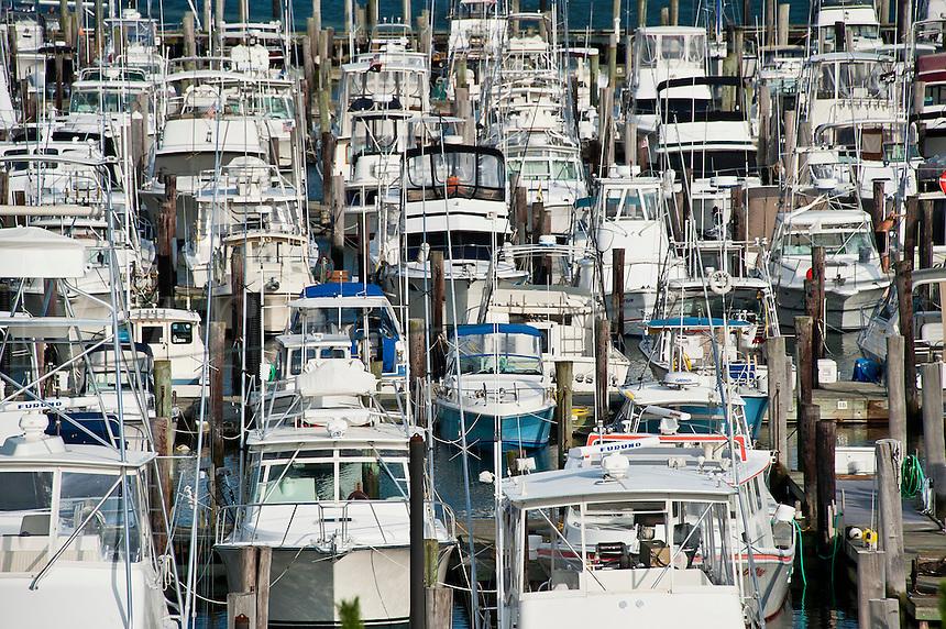 Cape May Harbor marina, NJ, New Jersey, USA
