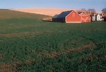 Farming, Dry Land wheat, farm, Eastern Washington State, USA,