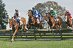 25 Apr 2009: Hey Doctor, ridden by Christopher Read; G'Day G'Day (2nd), ridden by Paddy Yound; Kilbreena (IRE) (3rd), ridden by James Slater; Westfield Dancer (IRE) (1st) ridden by Richard Spate in the Grover Vandevender Memorial maiden timber race at the Foxfield Races in Charlottesville, Virginia. Westfield Dancer is owned by Lucy Horner and trained by Barbara McWade.