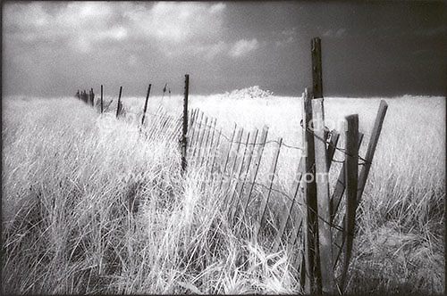 Fence through field, Sag Harbor, NY<br />