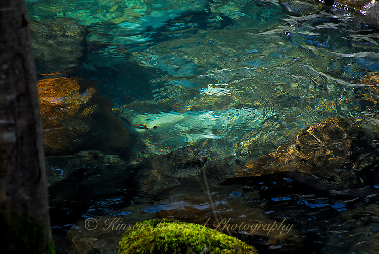"""""""THIS WAY DARKLY""""<br /> <br /> Green and brown brooding waters of Patrick Creek in California. Foreboding yet beautiful. ORIGINAL 24 X 36 GALLERY WRAPPED CANVAS SIGNED BY THE ARTIST $2,500. CONTACT FOR AVAILABILITY."""