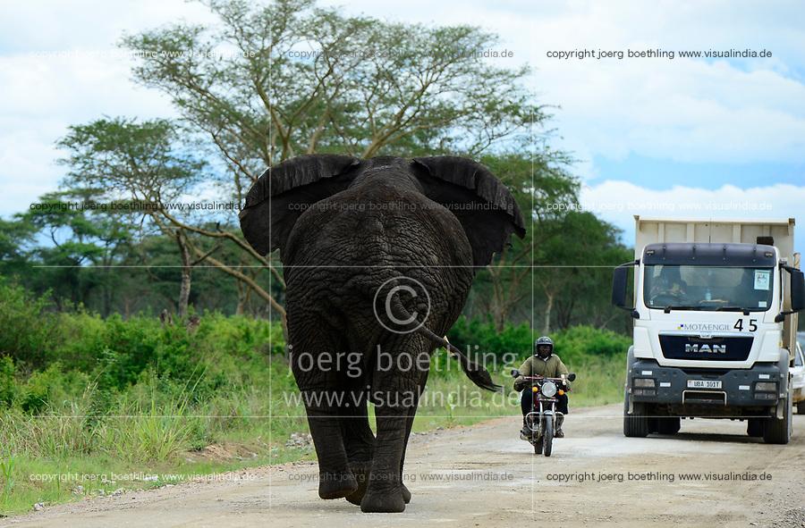UGANDA, Kasese, Queen Elizabeth Nationalpark, elephant on the public road / Elefant auf Strasse durch den Queen Elizabeth Nationalpark