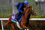 October 31, 2018 : Line of Duty (IRE), trained by Charlie Appleby, exercises in preparation for the Breeders' Cup Juvenile Turf at Churchill Downs on October 31, 2018 in Louisville, Kentucky. John Voorhees/Eclipse Sportswire/CSM
