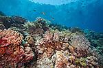 Coral reef, Kurkap, Seamount, Indonesia