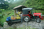 A trailor connected to a tractor is being used to trasport freshly plucked leaves to the factory.