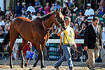 August 02 2015: American Pharoah, ridden by Victor Espinoza, wins the Haskell Invitational on Haskell Day at Monmouth Park in Oceanport, NJ. Bob Mayberger/ESW/CSM