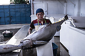 A worker carries the sustainably caught yellow fin tuna as it is received at the Casa, the Tuna buying house in Puerto Princesa, Palawan in the Philippines. <br /> Photo: Sanjit Das/Panos for Greenpeace