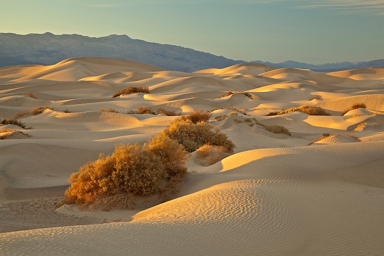 Mesquite Flat Sand Dunes in Death Valley National Park, California, USA