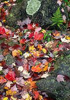 Fallen autumn leaves, Holyoke Park, Carlton County, Minnesota