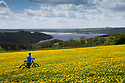12/05/15<br /> <br /> Pete Tye, 76, stops his bicycle near Middleton Top, Wirksworth, to catch his breath and marvel at a stunning vista of acres of dandelions stretching into the distance above Carsingston Water, as blustery weather blows over the Derbyshire Peak District<br /> <br /> <br /> All Rights Reserved: F Stop Press Ltd. +44(0)1335 418629   www.fstoppress.com.