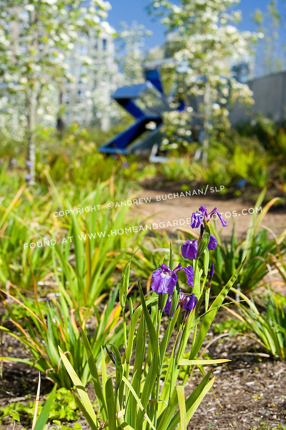 """Just above The Valley, the polished stainless surface of Beverly Pepper's, """"Perre's Ventaglio III, 1967"""", reflects and even becomes part of the surroundings of native dogwoods and Pacific Coast Iris in bloom, again highlighting the meeting of art and nature that is one of the primary goals of the Park.   SAM's Olympic Sculpture Park, Seattle, WA."""