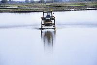 - cultivation of the rice in province of Novara, seeding....- coltivazione del riso in provincia di Novara, semina