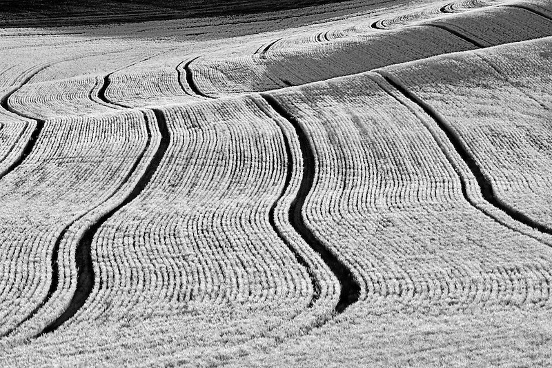 Planting lines in wheat field. The Palouse, Washington