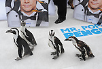 Penguins at Twentieth Century Fox's L.A. Premiere of Mr. Popper's Penguins held at The Grauman's Chinese Theatre in Hollywood, California on June 12,2011                                                                               © 2010 Hollywood Press Agency