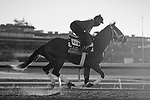 November 4, 2020: Mutasaabeq, trained by trainer Todd A. Pletcher, exercises in preparation for the Breeders' Cup Juvenile Turf at Keeneland Racetrack in Lexington, Kentucky on November 4, 2020. Gabriella Audi/Eclipse Sportswire/Breeder's Cup/CSM