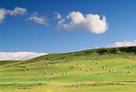 Fields of baled hay, Alberta, Canada