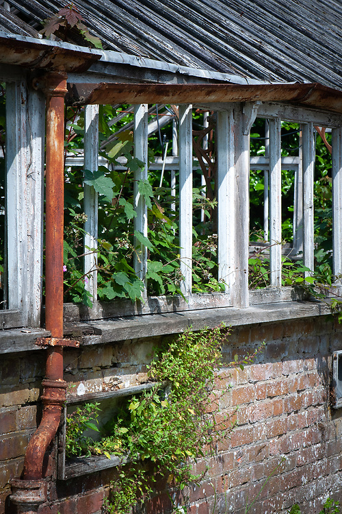 Greenhouse, Borde Hill, Sussex.