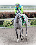 HALLANDALE BEACH, FL - JAN 20:Galleon Mast #5 with Irad Ortiz Jr. in the irons for trainer David Fawkes heads back to the winner's circle after the running of the $150,000 Sunshine Millions Turf Stakes at Gulfstream Park on January 20, 2018 in Hallandale Beach, Florida. (Photo by Bob Aaron/Eclipse Sportswire/Getty Images)