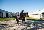 November 3, 2020: Golden Pal, trained by trainer Wesley A. Ward, exercises in preparation for the Breeders' Cup Juvenile Turf Sprint at  Keeneland Racetrack in Lexington, Kentucky on November 3, 2020. Alex Evers/Eclipse Sportswire/Breeders Cup