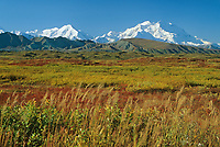 20, 3020+ Ft. Mt. Denali,  Autumn Tundra, Denali National Park, Alaska