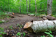 A freshly cut blowdown along the Mt Kinsman Trail in the White Mountains of New Hampshire. Much of the trail work done along the White Mountain trail system is done by volunteers.