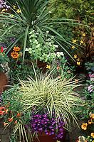 Beautiful container garden with ornamental grass variegated Carex & Phormium, Lobelia, Gazania, etc.