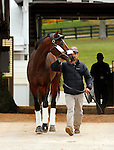 October 26 2015: Tonalist, trained by Christophe Clement, and owned by Robert S. Evans, entered in the Breeder's Cup Classic Grade 1 $5,000,000.  Candice Chavez/ESW/CSM