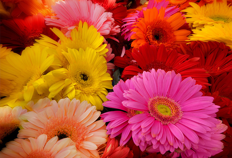 Mixture of Gerbera flowers at a farmers market in Los Angeles, California