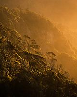 Native coastal forest at sunset, UNESCO World Heritage Area, South Westland, West Coast, New Zealand, NZ