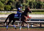 OCT 26: Channel Maker at Santa Anita Park in Arcadia, California on Oct 26, 2019. Evers/Eclipse Sportswire/Breeders' Cup