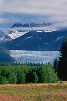 Fireweed and Mendenhall Glacier<br />   from Mendenhall River Valley<br /> Tongass National Forest<br /> Alaska