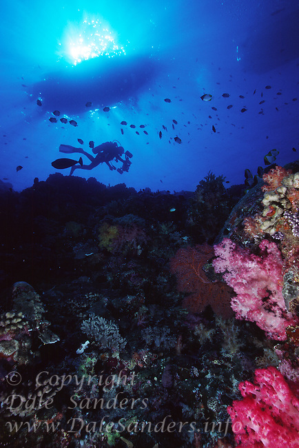 A boat and divers float above soft corals on the edge of a coral reef, Republic of Palau, Micronesia.