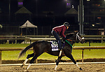 October 30, 2018 : Bravazo at Churchill Downs on October 30, 2018  in Louisville, Kentucky in preparation for the Breeders' Cup Dirt Mile. Mary M. Meek/ESW/CSM