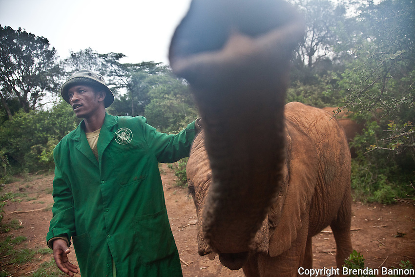 Abdi Kashel, a keeper, with one of the 18 orphaned baby elephants at the David Sheldrick Wildlife Trust in Nairobi National Park.